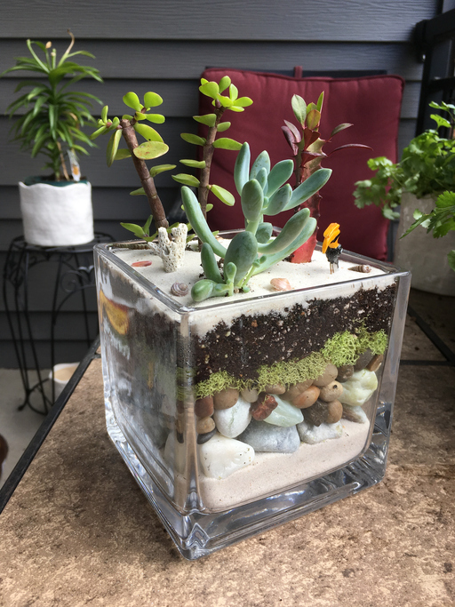 Growing Succulents In Your Apartment