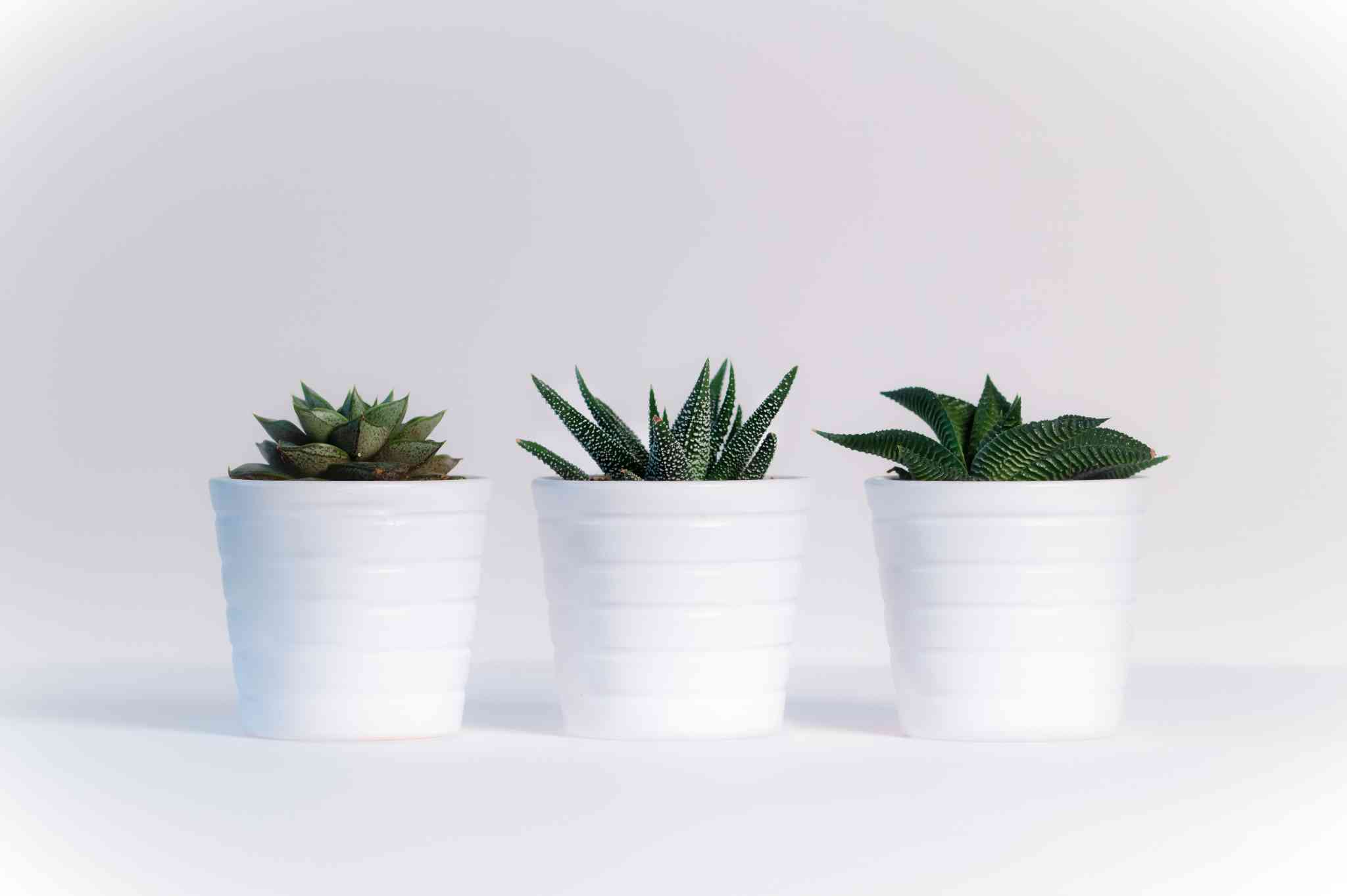 Check out these tips for growing succulents in your apartment.