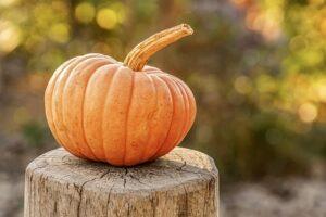 pumpkins harborside village